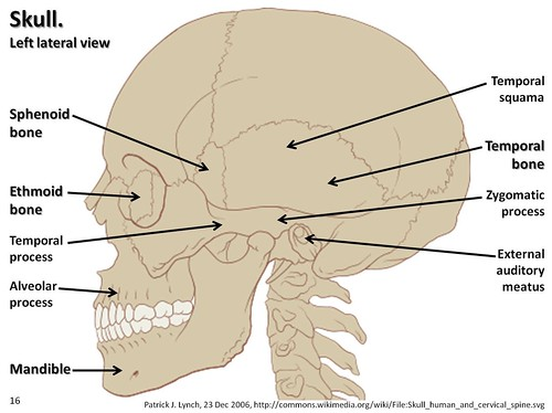 Skull diagram lateral view with labels part 2 axial skeleton skull diagram lateral view with labels part 2 axial skeleton visual atlas page 16 ccuart Gallery
