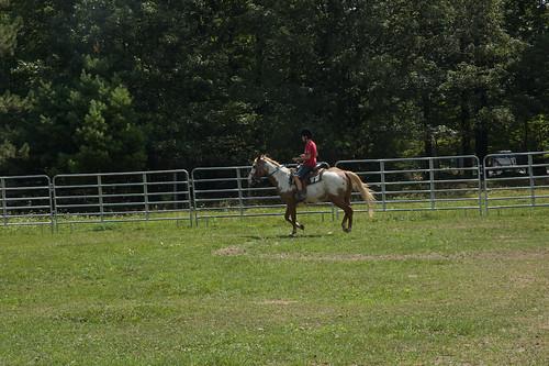 Horses-Aleshe-4