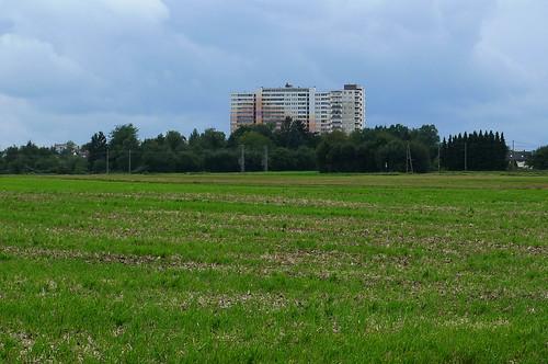 Auf dem Feld vor Bonames. Ende August 2010