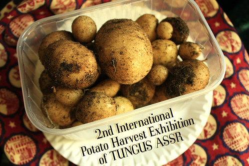 2nd International Potato Harvest Exhibition of TUNGUS ASSR