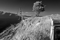 Golden Gate Bridge [Infrared] (jcbwalsh) Tags: sanfrancisco california ca bridge cliff tree beach wave goldengate infrared presidio
