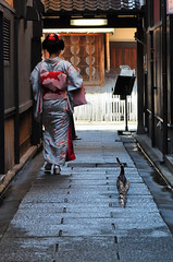 Drama in back alley   (Explored) (kagechiyo.) Tags: street woman japan cat alley kyoto maiko    kimono gion rearview