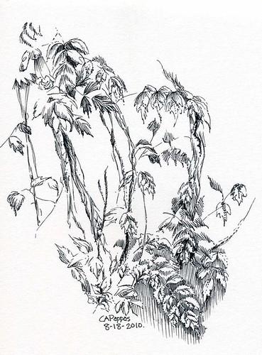 8-18-2010, trumpet flower