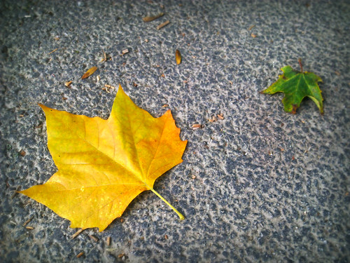 Day 104 - Autumn is a Coming