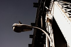 (eflon) Tags: bridge bird rock streetlight industrial pigeon spots dust vignette sensor