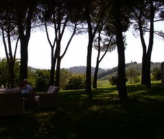 Father In Law in the pines (Mamluke) Tags: trees italy tree relax reading afternoon boom pines tuscany rbol seating toscana albero midday seated arbre baum fa