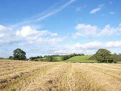 Wheat field (john.k3lly) Tags: autumn sky field clouds wheat rows