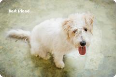 Best friend (--- KORGAN ---) Tags: dog pets animal perro tomas martinez mascota