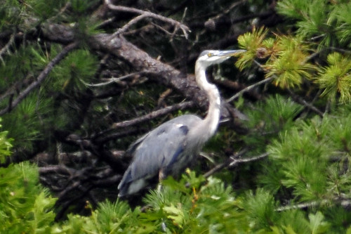 GBH Monks cove 2