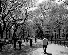 Heavenly Pathway (asabatino) Tags: park new york city trees white black classic path central stop walkway covered freeze frame heavenly pathway