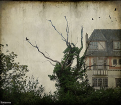 The House down the Lane! (rubyblossom.) Tags: house tree birds bare 19 comptition ghostworkstexture