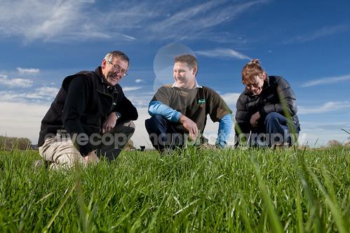 Da Grass Is Greener