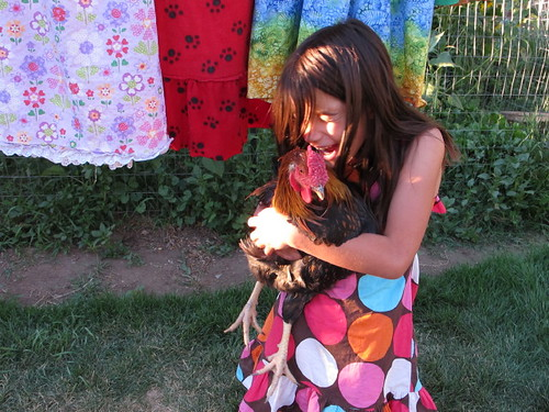 Colorful rooster love