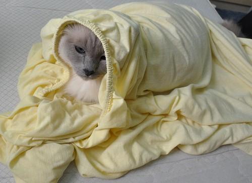 Bettenmachen