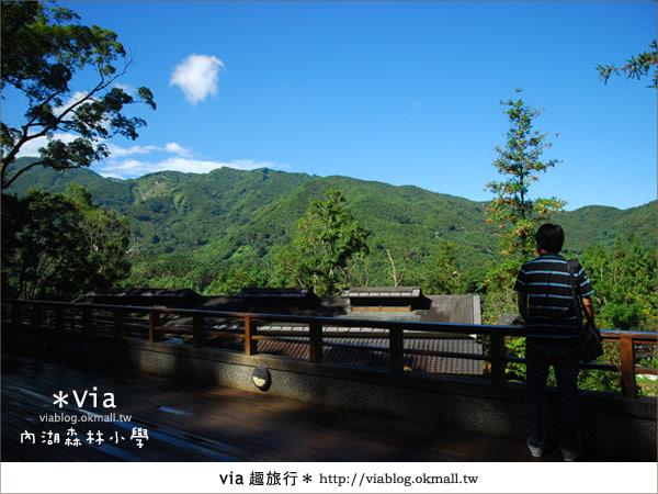 【溪頭一日遊】森林中的夢幻校園~內湖森林小學41