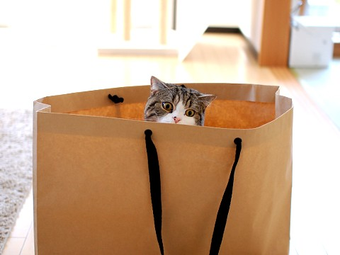 cute maru the cat hiding in a bag