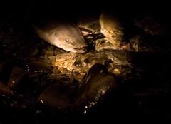 Night Eels (C) Sep 2010