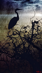 Hard_rain5 (jan pycke) Tags: heron leaves rain birds mystery dead moody rusty rainy environment darkart hardrain speedpainting eveningmood wiredfence psbrushes floodedbranches awardchariotofartists