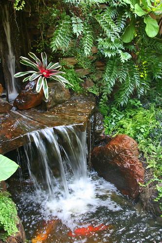 Wolford garden waterfall koi