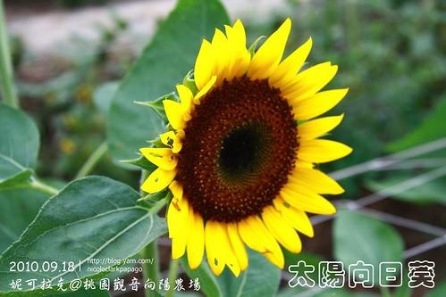 桃園觀音向陽農場20100918-083