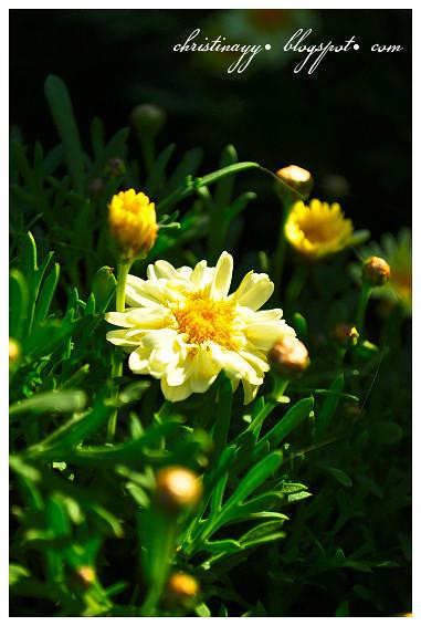 Newtown Park State Rose Garden (Queens Park)