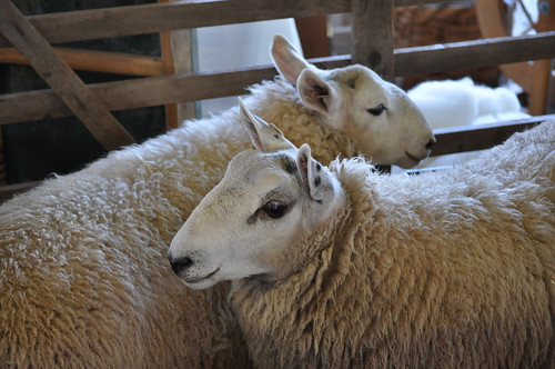 Garden State Sheep Breeders 2010
