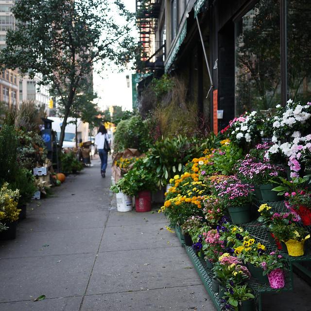 #walkingtoworktoday through the flower jungle