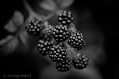 Blackberry (justingreen19) Tags: autumn summer england bw food white black fruit canon countryside interestingness juicy bush berry dof blackberry natural juice country 100mm september explore hedge pick essex tone f28 vitaminc blackberries picking bramble greyscale ism lseries justingreen