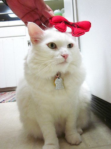 Nilla trying on the bow.