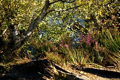 NorthGlenSannoxWater20 (Assja) Tags: autumn mountains fall water leaves forest landscape golden scotland highlands rocks stream heather herbst glen hills naturereserve valley bracken rowan isleofarran birches indiansummer birchtree schottland wirbel herbststimmung ruska naturreservat hochland wildbach zauberwald birkenwald farnkraut heidekraut ebereschen torfmoor remarkabletrees feenwald wildpfad thebrackenisgoldinthesun northendofarran subarktischestimmung