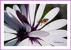 Flower. (Carlos Andrade B. / abaimagen.com Guanajuato Team.) Tags: grouptripod beautifulmonsters