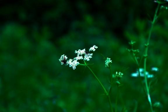 Jiuzhaigou flower15