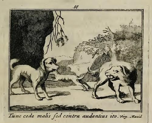 Canis Unus Audax
