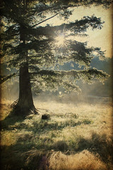 Morning (retroimage) Tags: morning sun tree day dew sunrays streaming sunlinght fauxvintage lovelyandamazingvintageinspired