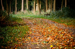Autumn is coming (Sebastian_Stern) Tags: autumn trees orange color colour green grass leaves lines forest bench way 50mm walk sony laub herbst tracks spuren bank foliage gras grn alpha f18 a200 wald bltter farbe bume weg autumniscoming sonyalpha sony50mm sonya200 sony50mmf18 sebastianstern