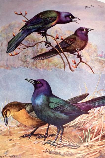 bird seven
