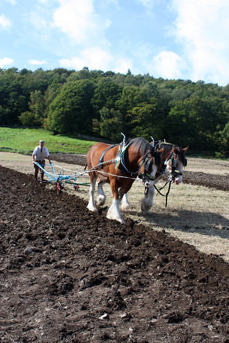 Clydesdale horse team ploughing 1