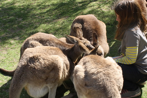 the kangaroo whisperer