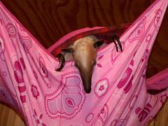 Pua in her hammock