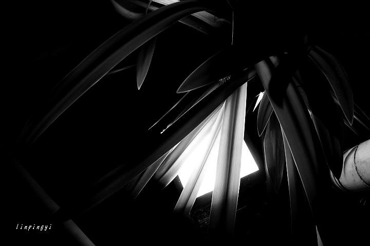 黑白snap