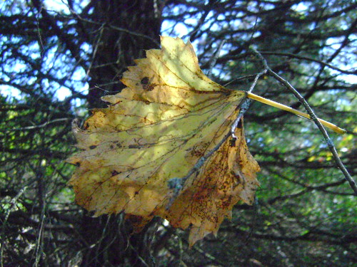 Fallen Leaf Held by a Branch