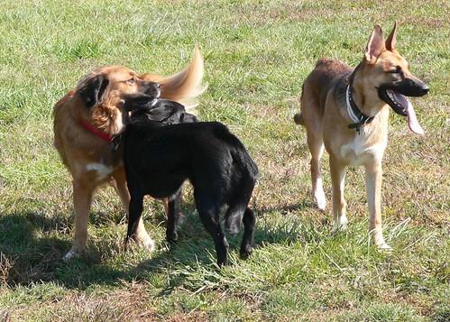 At the Dog Park