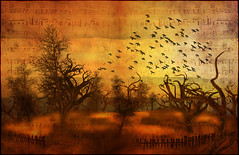 autUmN (~Alia~) Tags: winter light sky tree bird texture birds night clouds lights sl ciel secondlife arbre textured oiseaux alia theblackbirds slwindlight qunhua sharingart aniatatarynowicz
