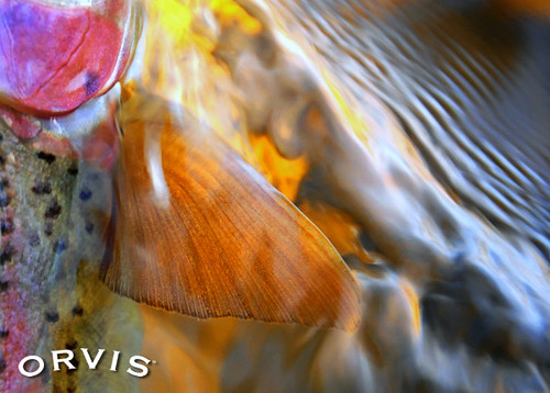 Orvis Fly Fishing Contest - Colors of Nature