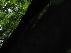 531007 เตาเผาถ่านกรมป่าไม้ 211