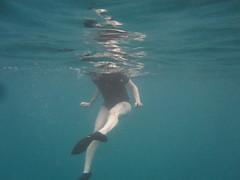 IMG_5644 (mntrb) Tags: snorkel turtle maui snorkeling seaturtle kihei hawaiiisland