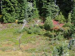Meadows near Eunice Lake.