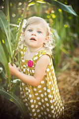 my evie (crystal.franks) Tags: fall oklahoma girl field pumpkin corn october toddler child farm daughter maze patch