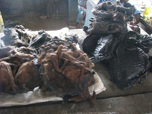 Bushmeat for sale in a one of Kindu's markets.