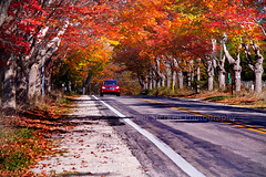 Pure Michigan Autumn (Craig - S) Tags: road street autumn red orange color green fall leaves car yellow leland drive maple you line explore thank lane shoulder gravel leelanau lelandmichigan m22 leelanaupeninsula leafers puremichigan